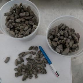 Cenizas volantes acondicionadas / Fly ash pellets