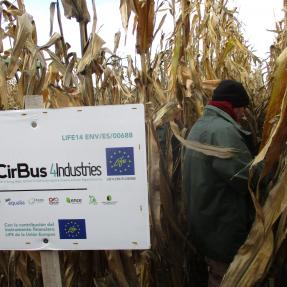 Cosecha maíz / Corn harvest - Nov18