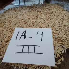 Cosecha de cereales de invierno: Avena / Winter cereal harvest: Oat - Jun 19