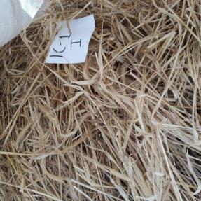 Cosecha de cereales de invierno: Cebada / Winter cereal harvest: Barley - Jun 19