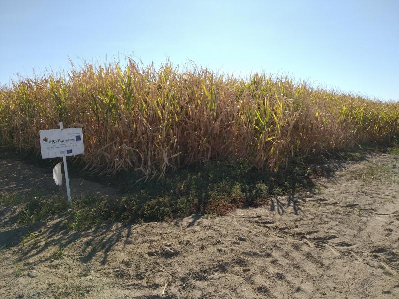 validación agricola maiz 2019 oct-19